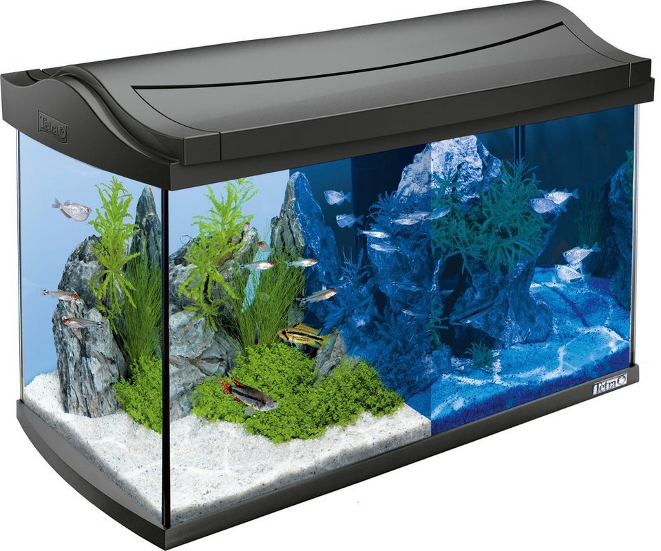 aquarium aquaart led discovery line 60 l anthrazit. Black Bedroom Furniture Sets. Home Design Ideas