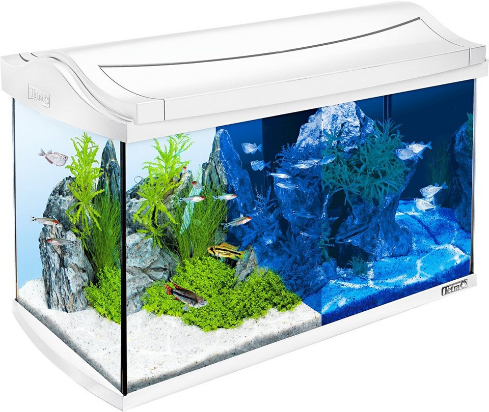 Aquarium »AquaArt LED Discovery Line« 60 l, weiß in weiß