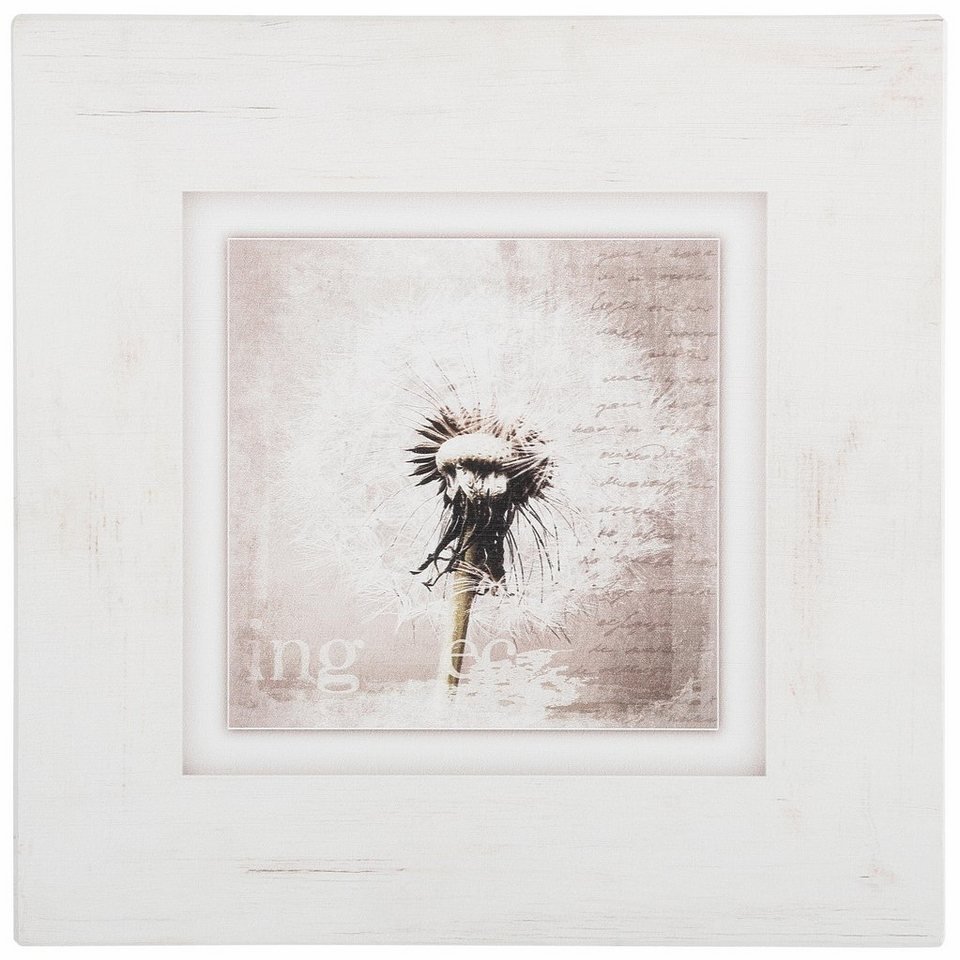 Holzbild, Home affaire, »Pusteblume«, 40/40 cm in creme