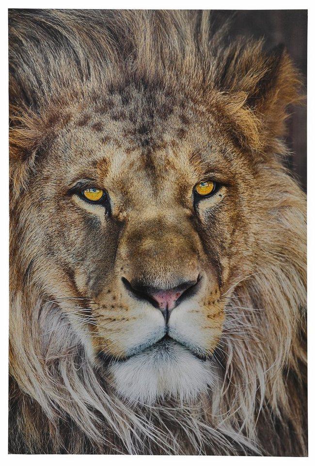 Fototapete, Komar, »Lion« 127/184 cm in bunt
