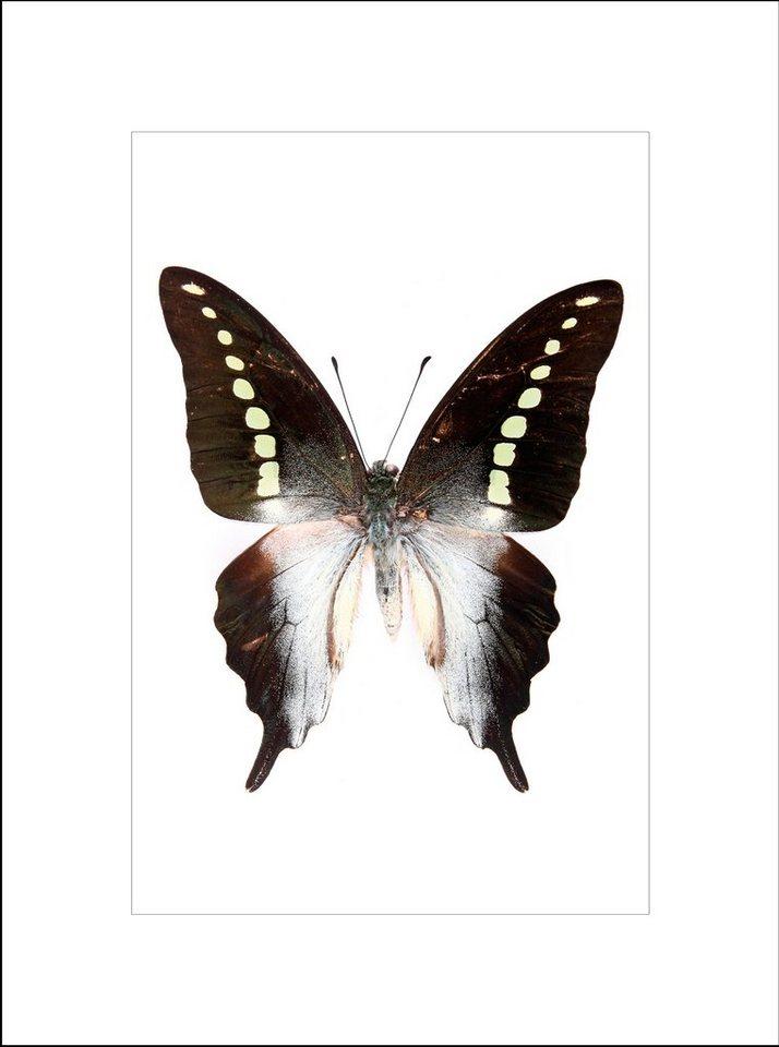 G&C gerahmter Kunstdruck »Ein wunderschöner Schmetterling«, 33/43 in schwarz/weiß