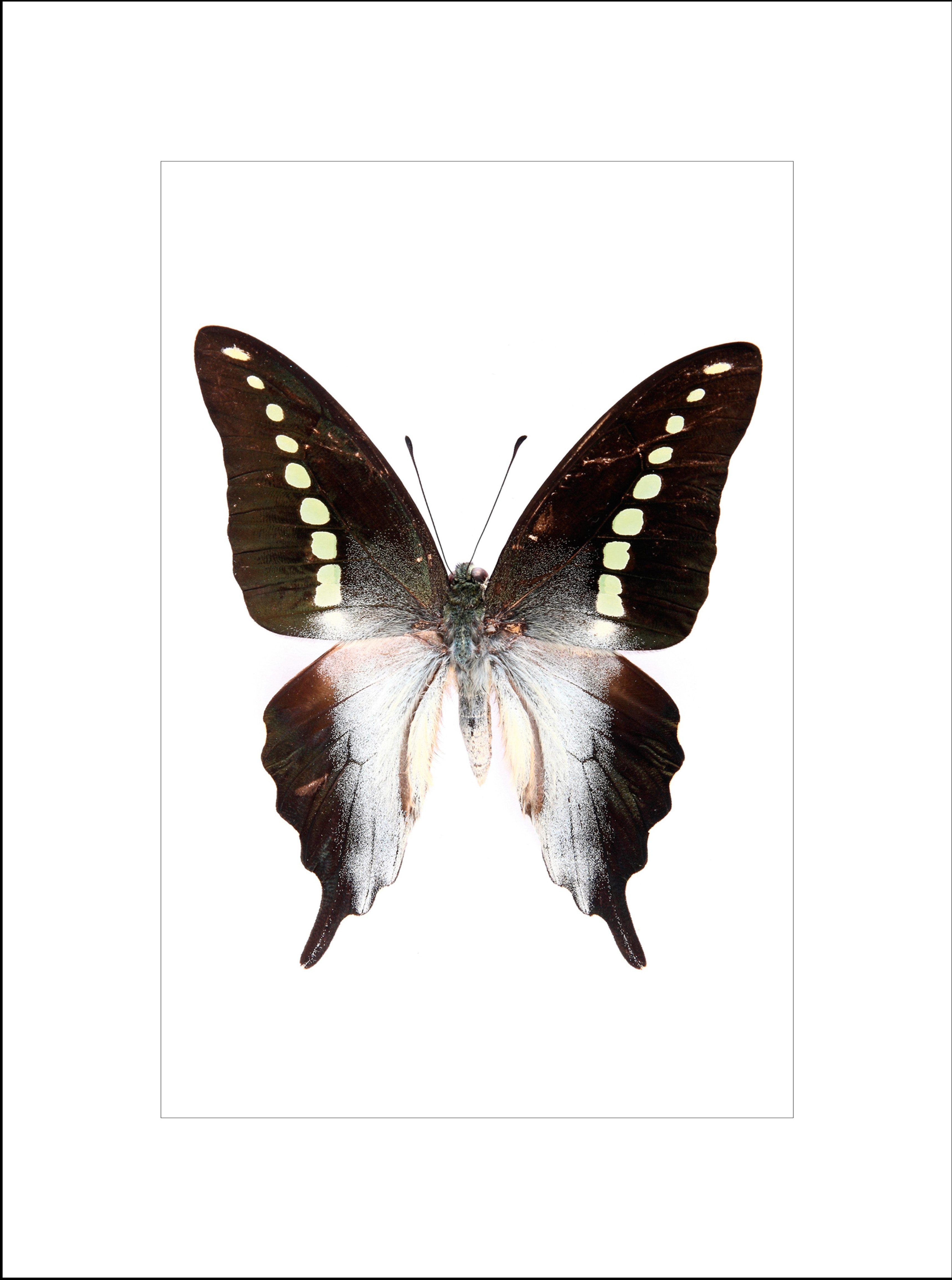 G&C gerahmter Kunstdruck »Ein wunderschöner Schmetterling«, 33/43