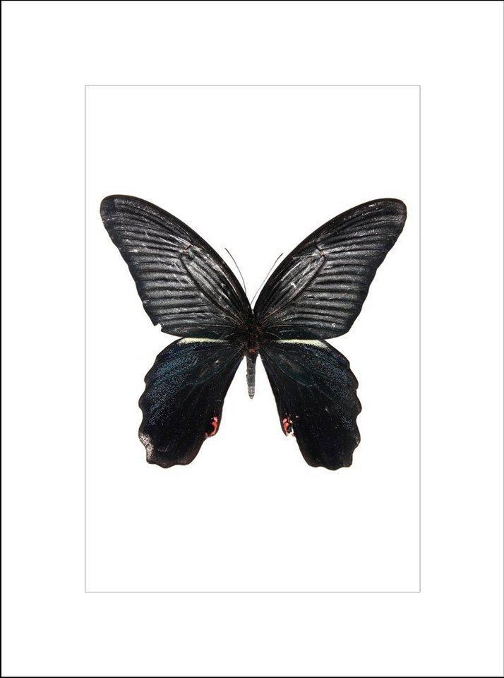 Home affaire gerahmter Kunstdruck »Ein wunderschöner Schmetterling«, 33/43 cm in schwarz/weiß