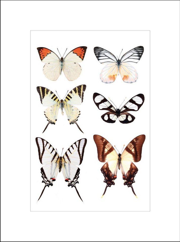 Home affaire gerahmter Kunstdruck »Schöne Schmetterlinge«, 33/43 cm in bunt