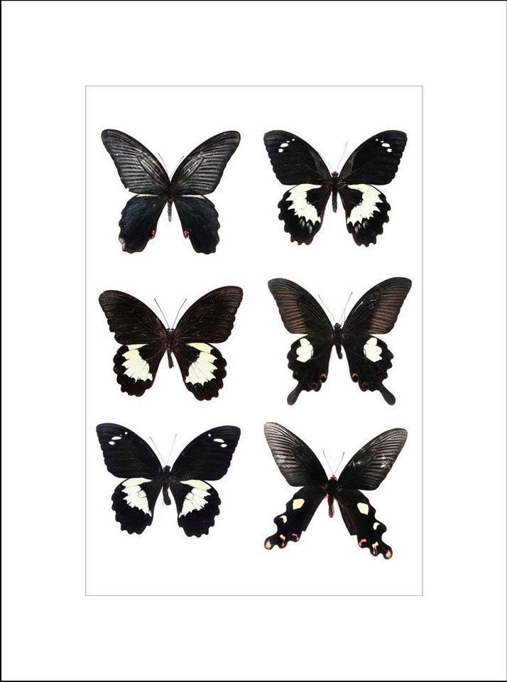 Home affaire gerahmter Kunstdruck »Schöne Schmetterlinge«, 33/43 cm in schwarz/weiß