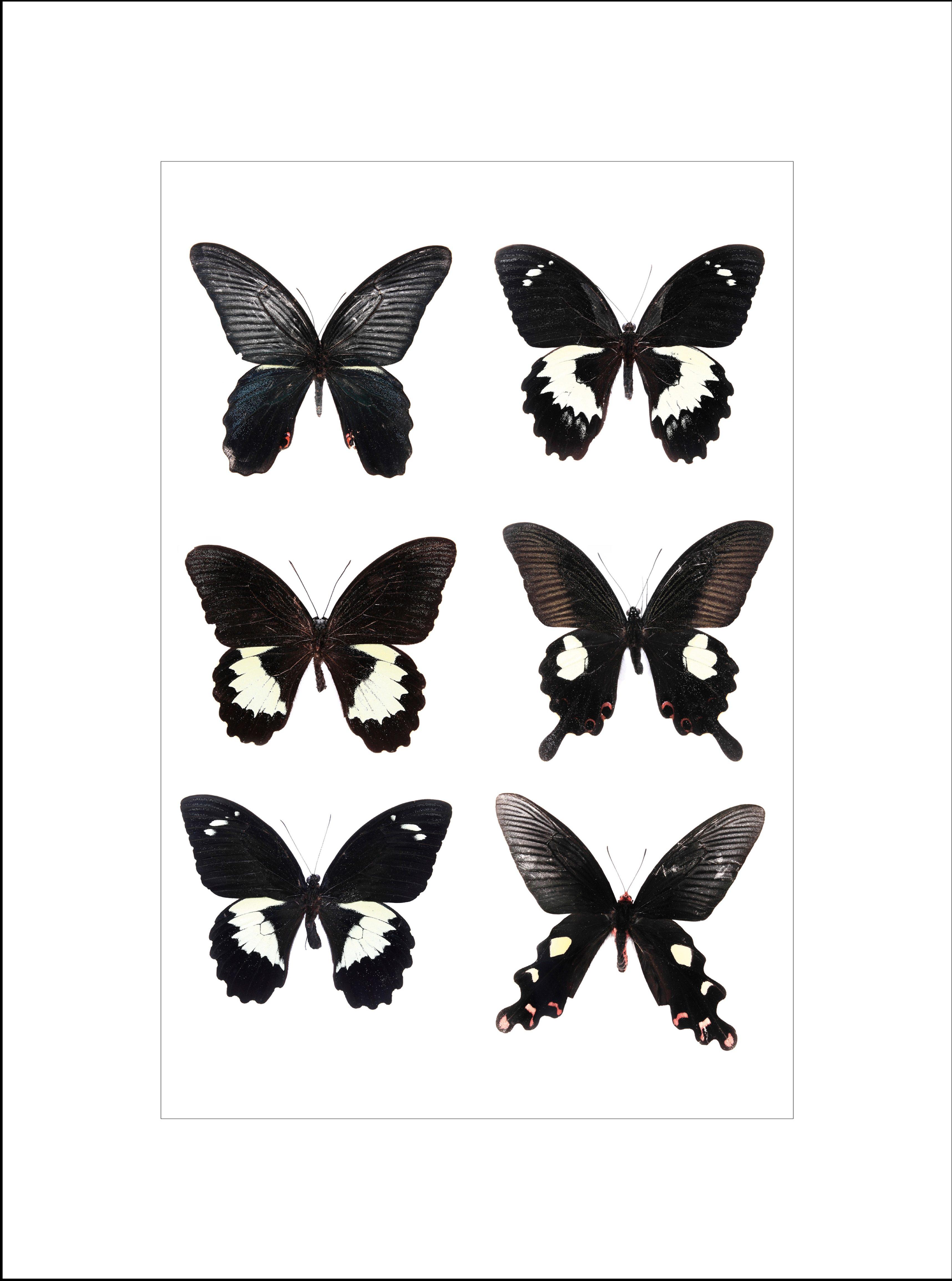 Home affaire gerahmter Kunstdruck »Schöne Schmetterlinge«, 33/43 cm