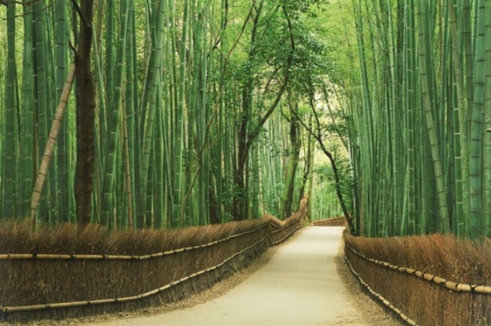 Home affaire Leinwandbild Bamboo Road«, 118/78 cm in grün/braun