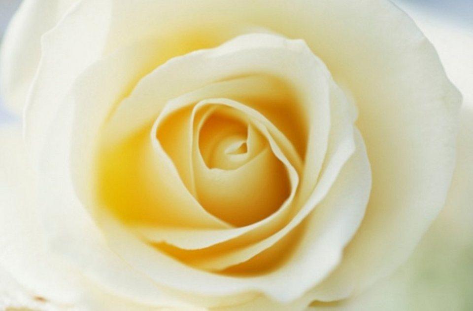 Home affaire Leinwandbild »Yellow Rose«, 118/78 cm in gelb/weiß
