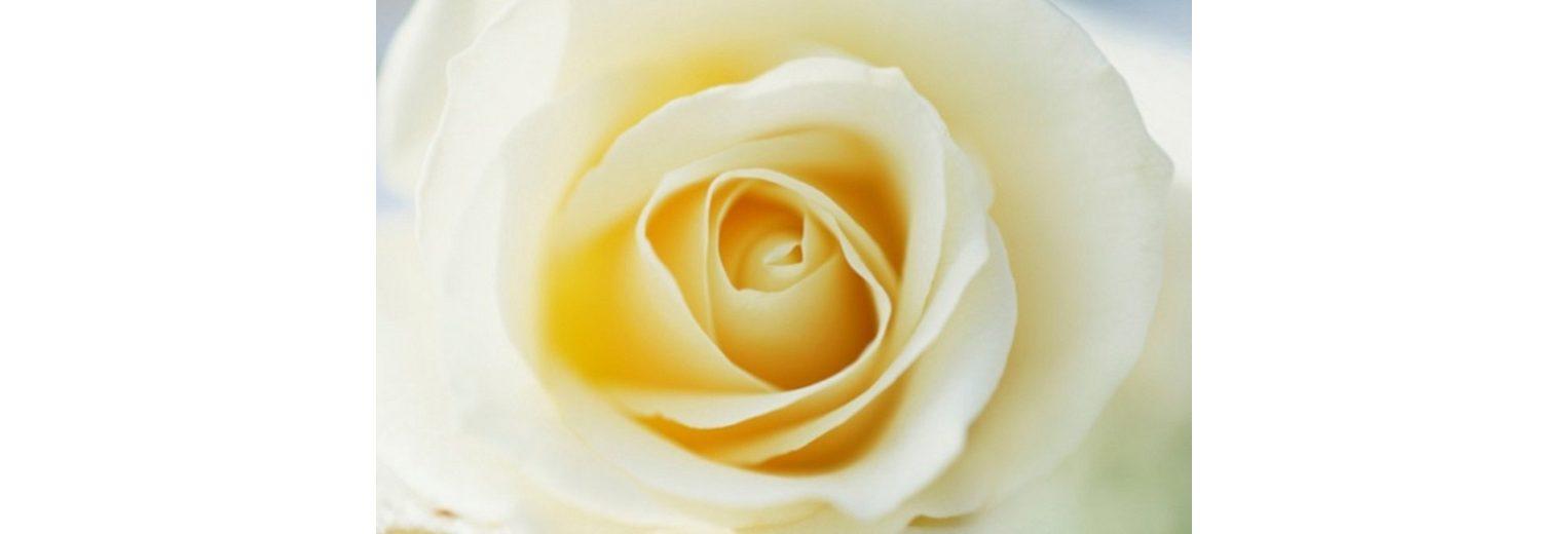 Home affaire Leinwandbild »Yellow Rose«, 118/78 cm