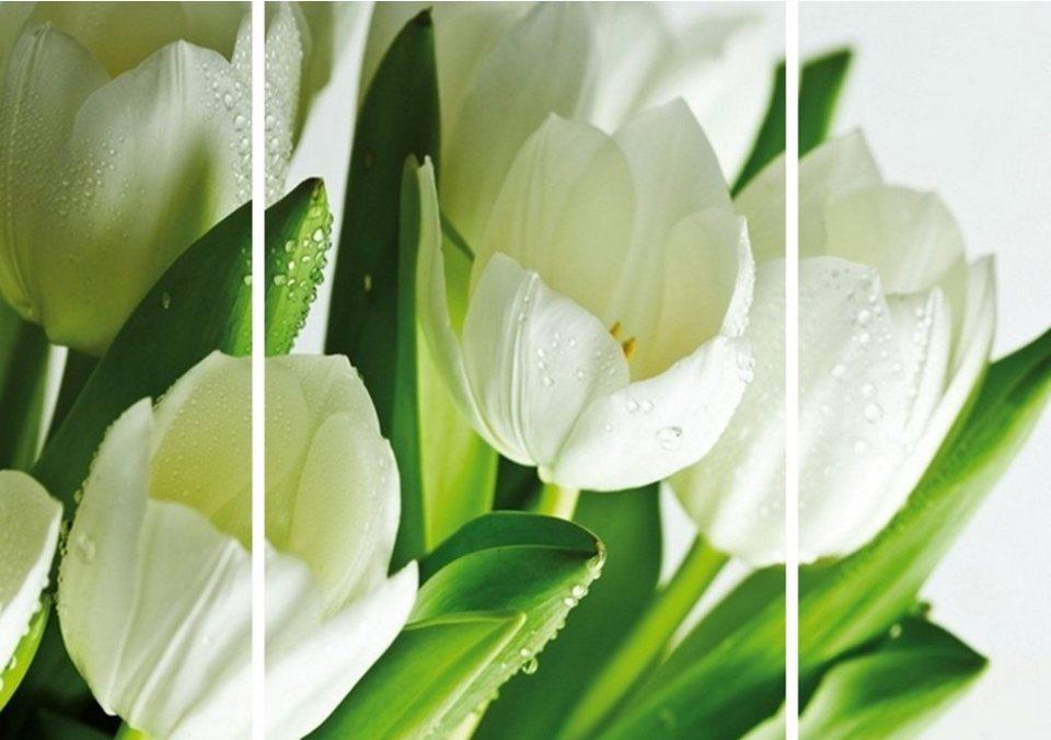 Home Affaire Bild Kunstdruck »Tulpen II«, (3-tlg.) in weiß/grün