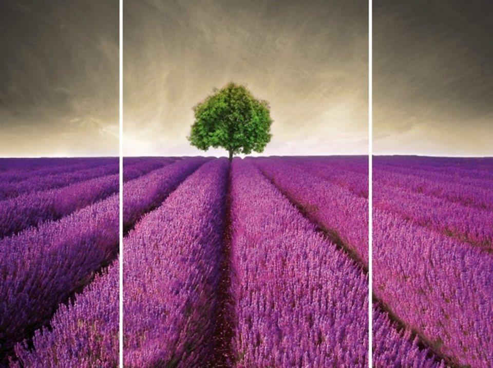 Home Affaire Bild Kunstdruck »Lavendelfeld«, (3-tlg.) in lila/grün