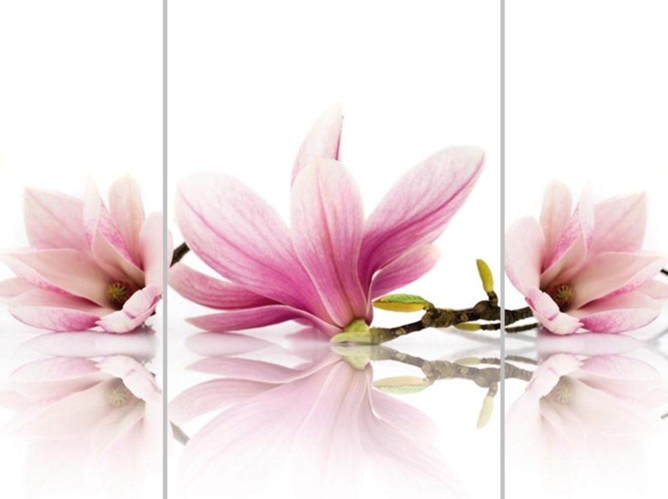 Home Affaire Bild Kunstdruck »Magnolia I«, (3-tlg.)