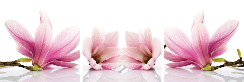 Home affaire Kunstdruck »Magnolia«, 3-tlg.