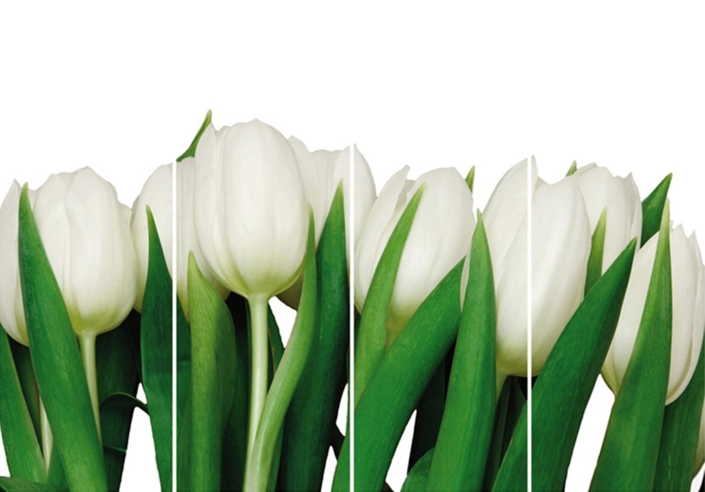 Home Affaire Bild Kunstdruck »Weiße Tulpen«, (4-tlg.)