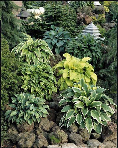 Pflanzen Schatten pflanzen schatten kaufen otto