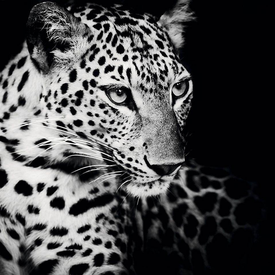 Home affaire, Deco Block »Könige der Natur - Leopard«, 90/90 cm in schwarz/grau