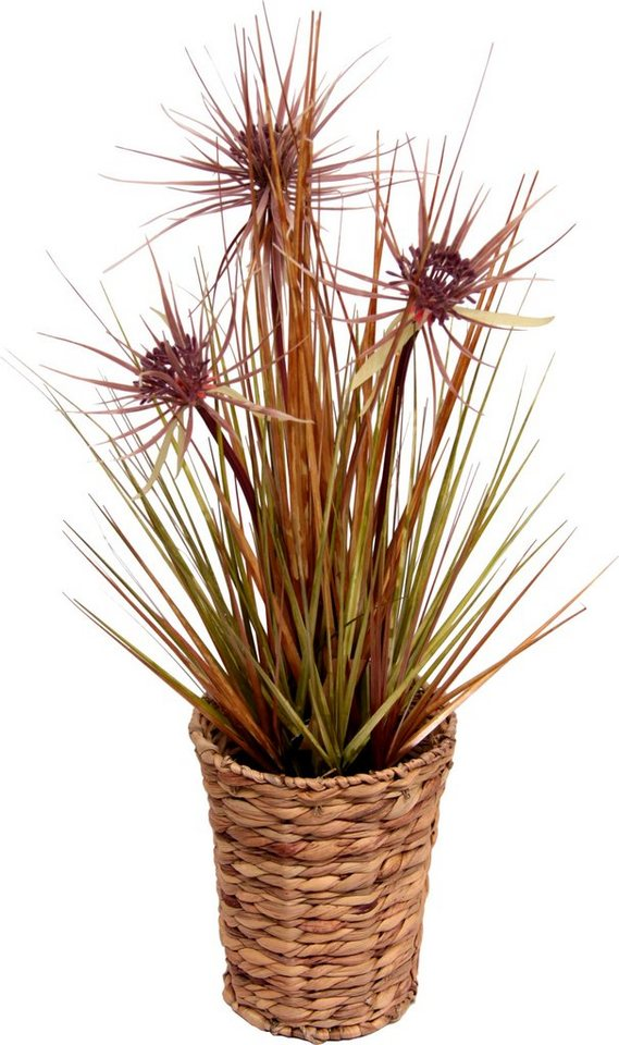 Home affaire, Kunstpflanze, »Papyrus im Wasserhyazinthentopf« in braun