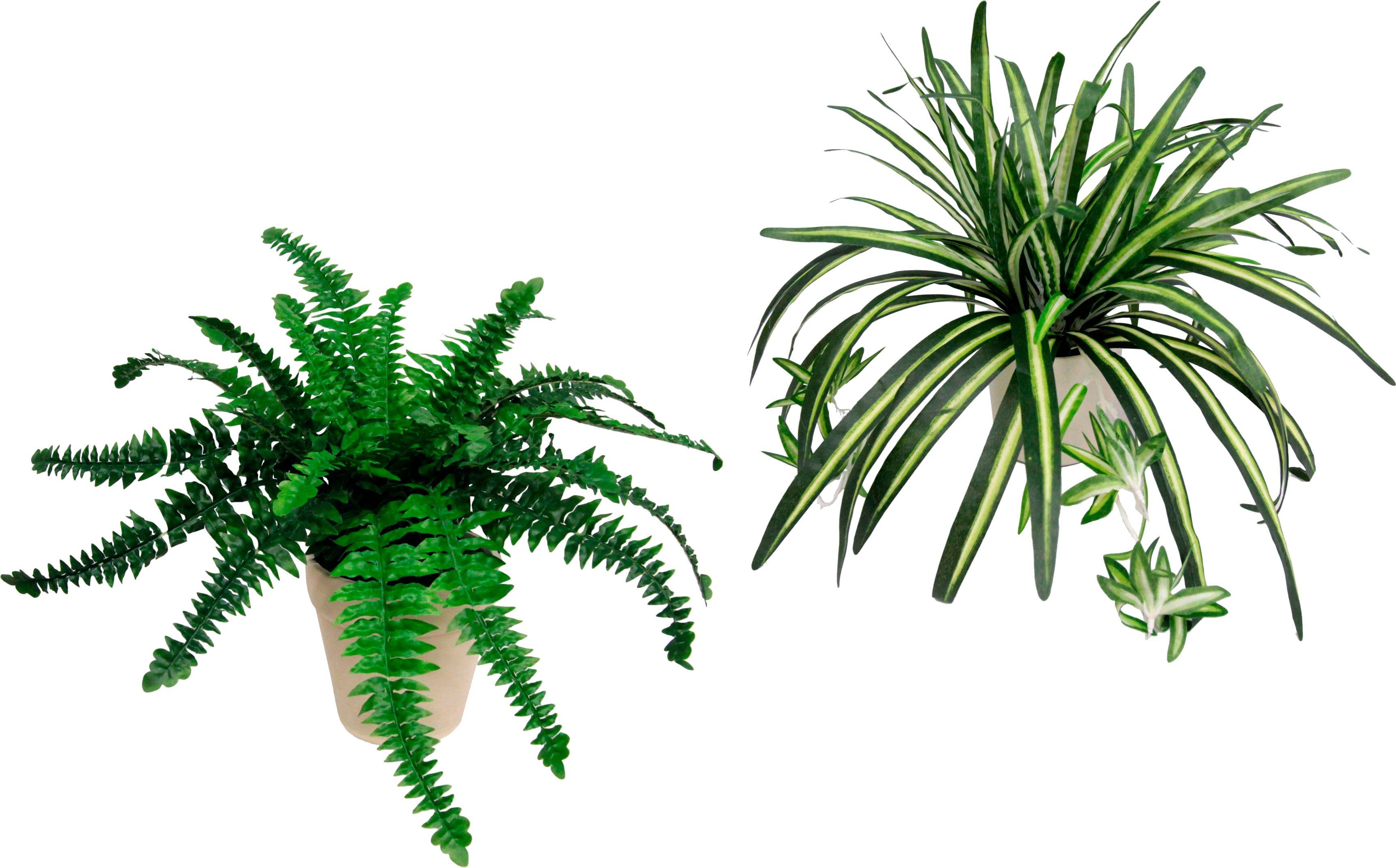 Home affaire, Kunstpflanze, »Farn und Wasserlilie«, (2-tlg.)