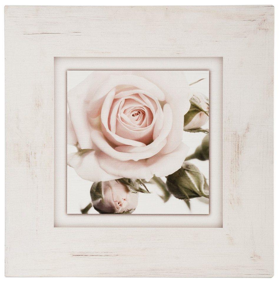 Holzbild, Home affaire, »Hellrosa Rosenblüte«, 40/40 cm in beige/rosa
