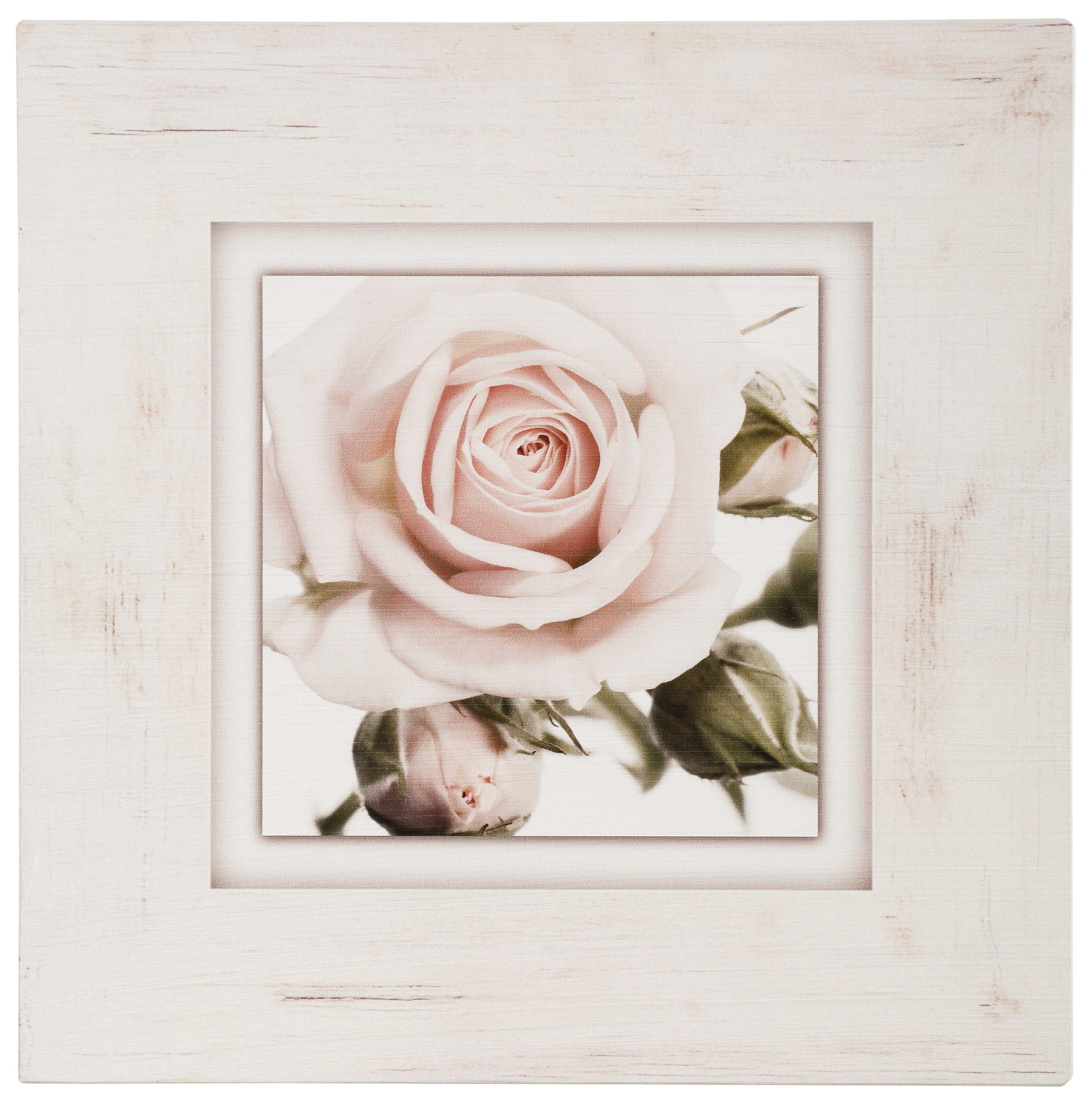 Holzbild, Home affaire, »Hellrosa Rosenblüte«, 40/40 cm