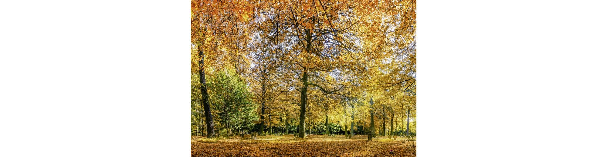 Home affaire Leinwandbild »eyetronic: Herbstwald Panorama«, 100/70 cm