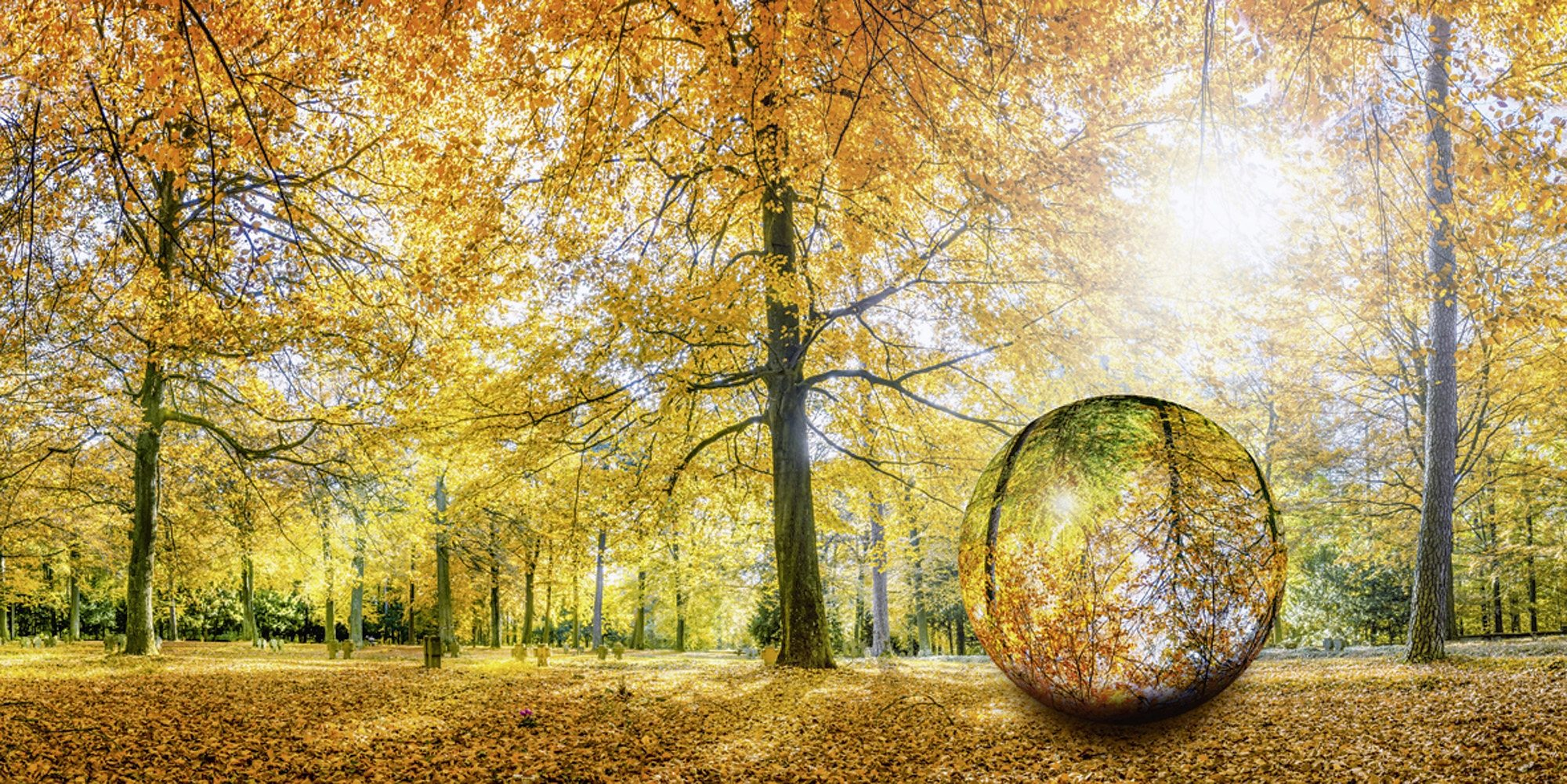 Home affaire Glasbild »eyetronic: Herbstwald Panorama - Glaskugel«, 100/50 cm
