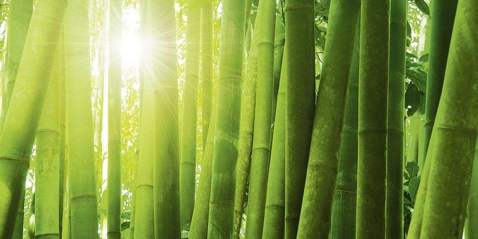Home affaire Glasbild »Szefei: Asiatischer Bambuswald im Morgenlicht«, 100/50 cm in Grün