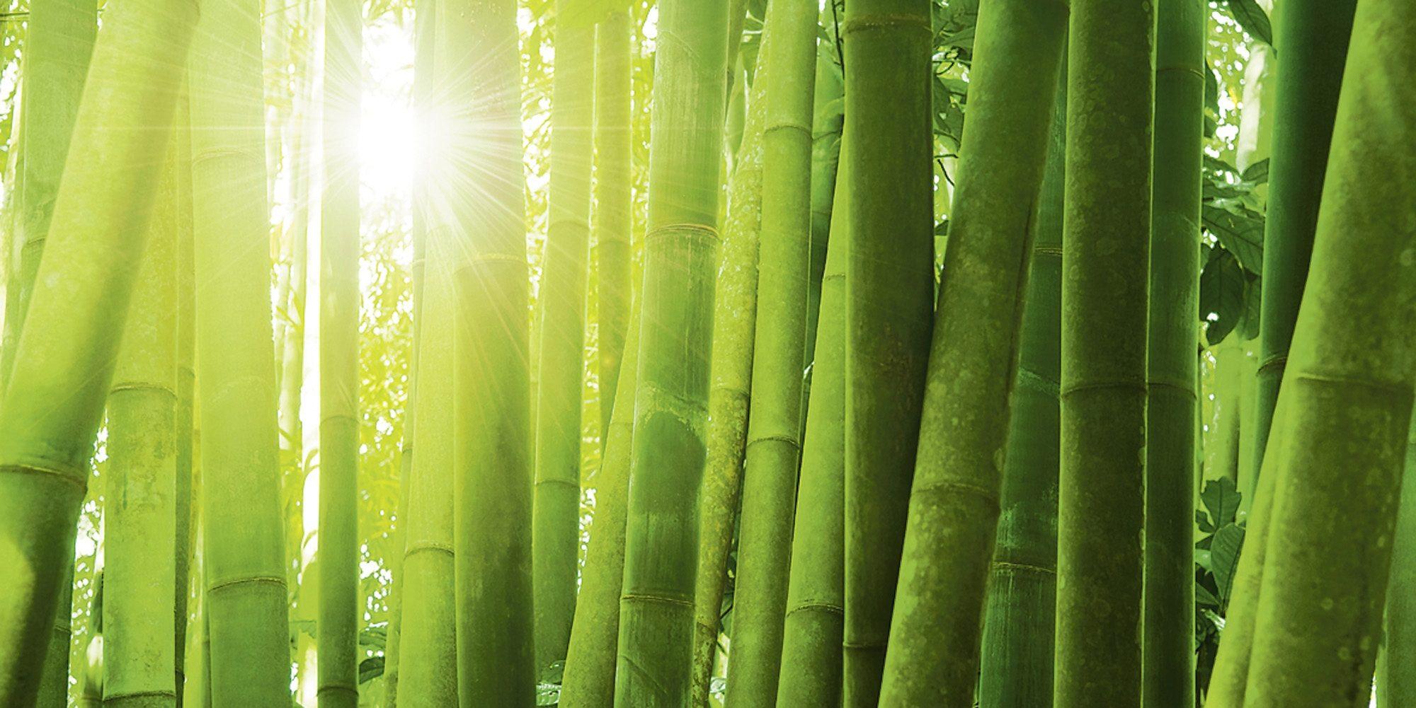 Home affaire Glasbild »Szefei: Asiatischer Bambuswald im Morgenlicht«, 100/50 cm