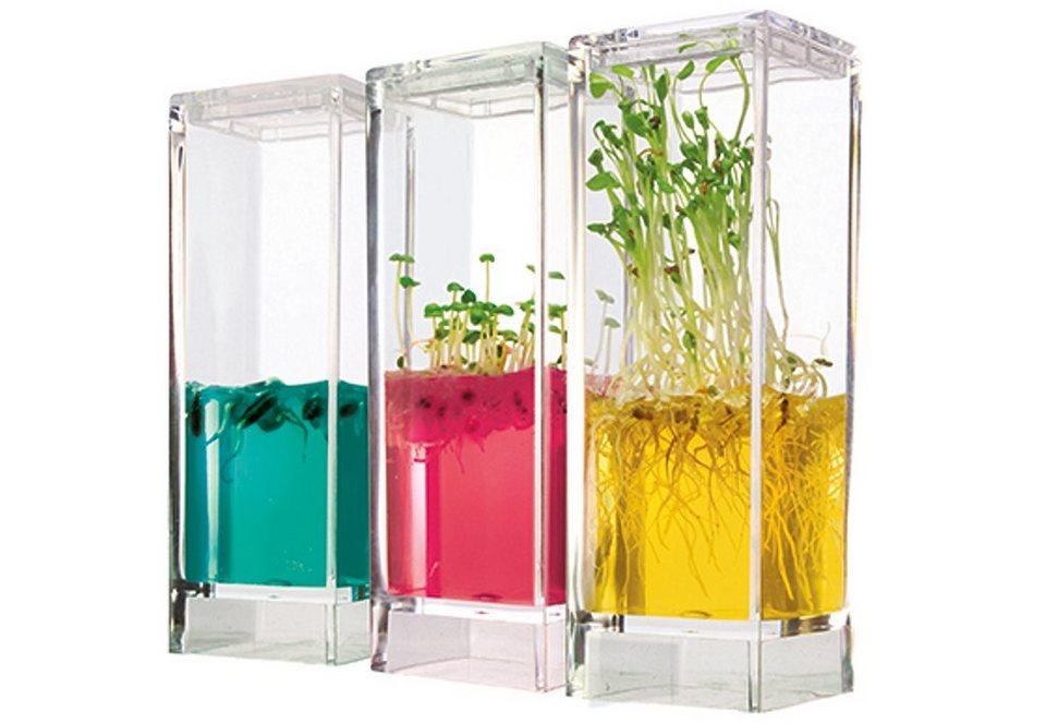 Mini-Ökosystem, »Plantarium® Garden Lab - Gewächshäuser«