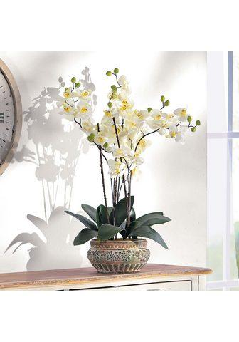 SCHNEIDER Dirbtinis augalas »Orchidee«
