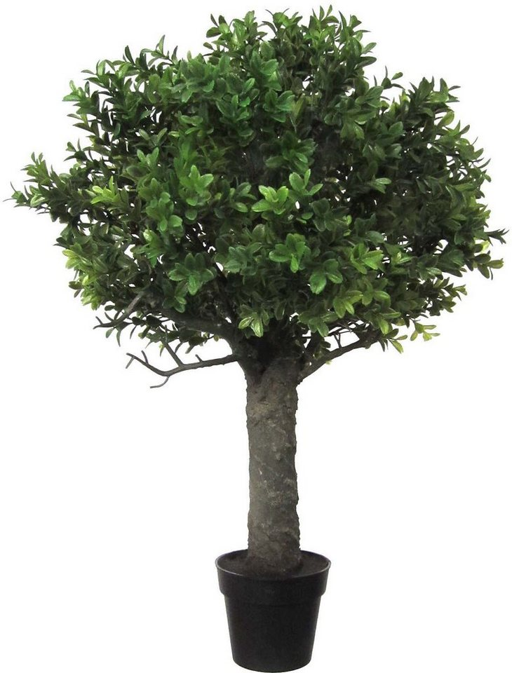 Home affaire Kunstpflanze »Buchsbaum« in grün
