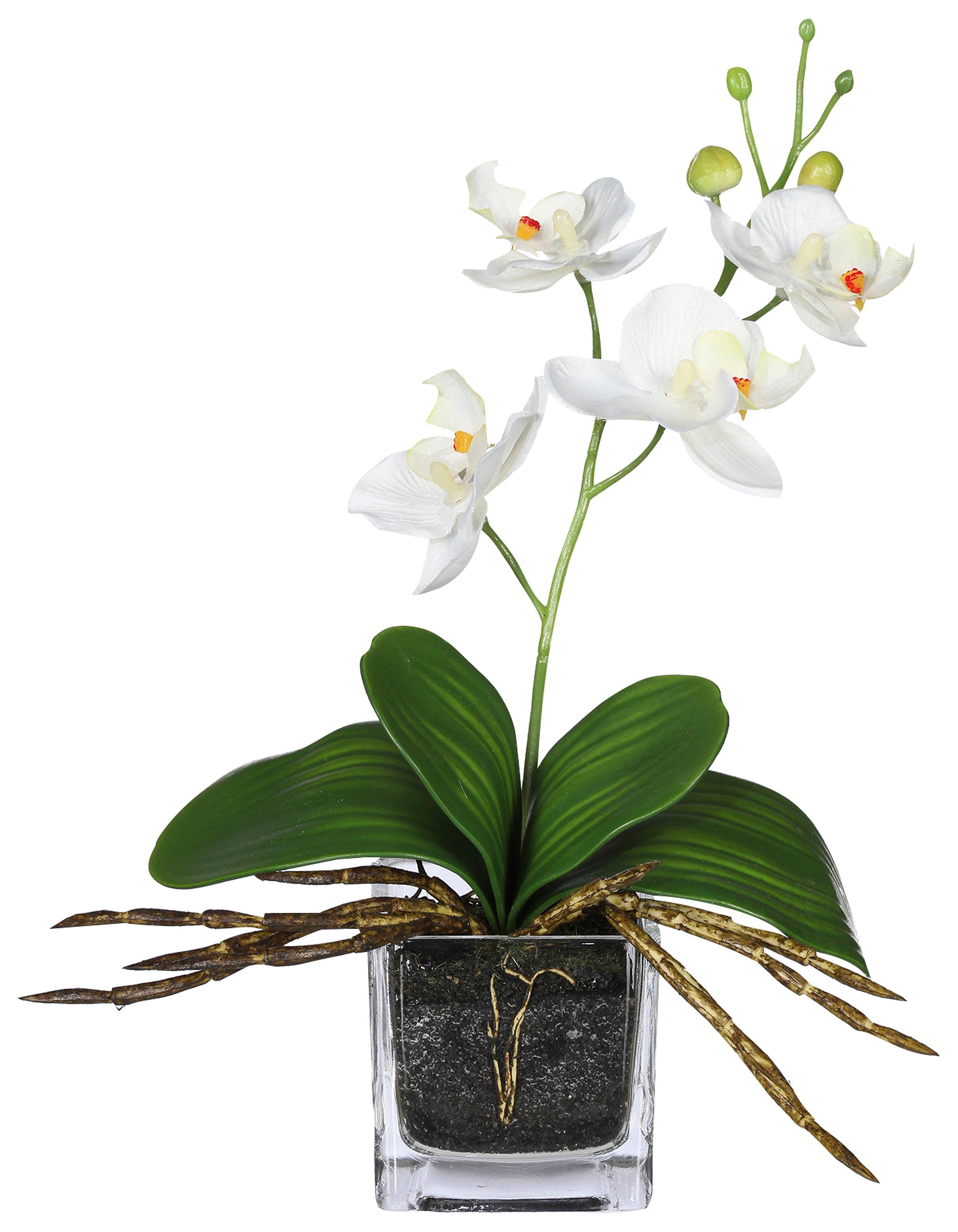 Home affaire Kunstblume »Orchidee« (3er Set)