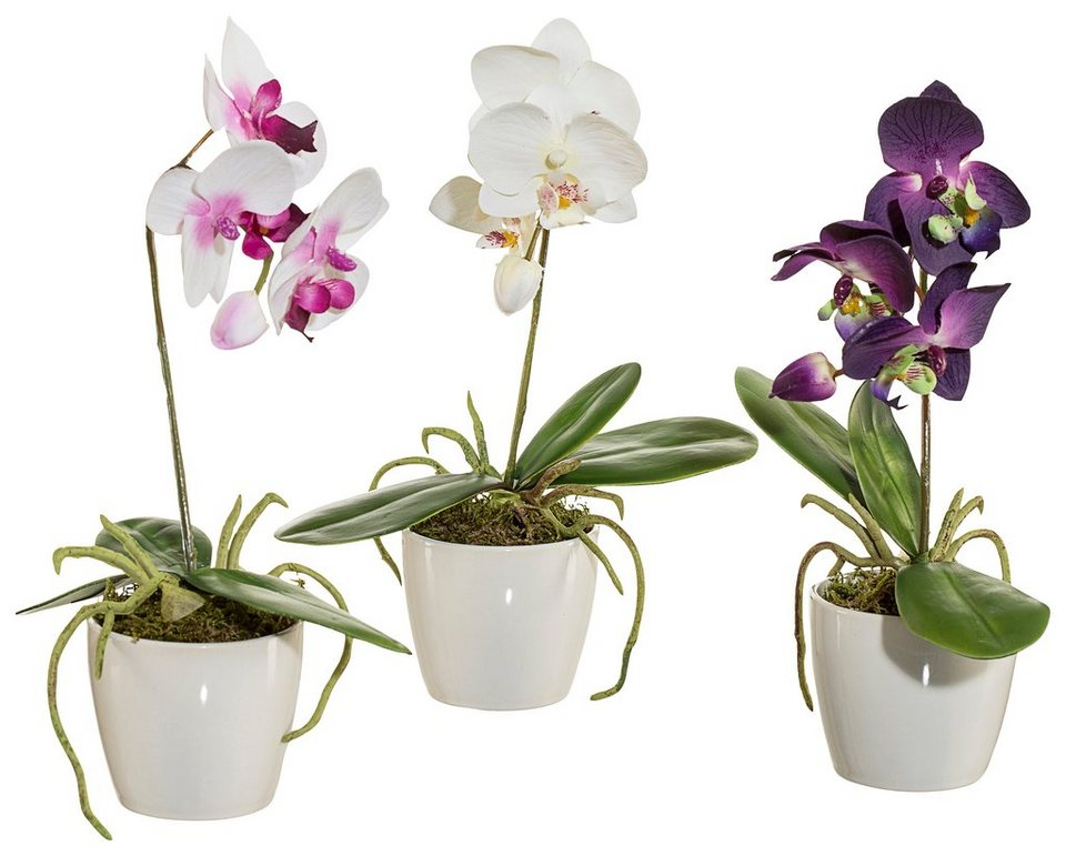 Home affaire Kunstblume »Orchidee« (3er Set) in bunt