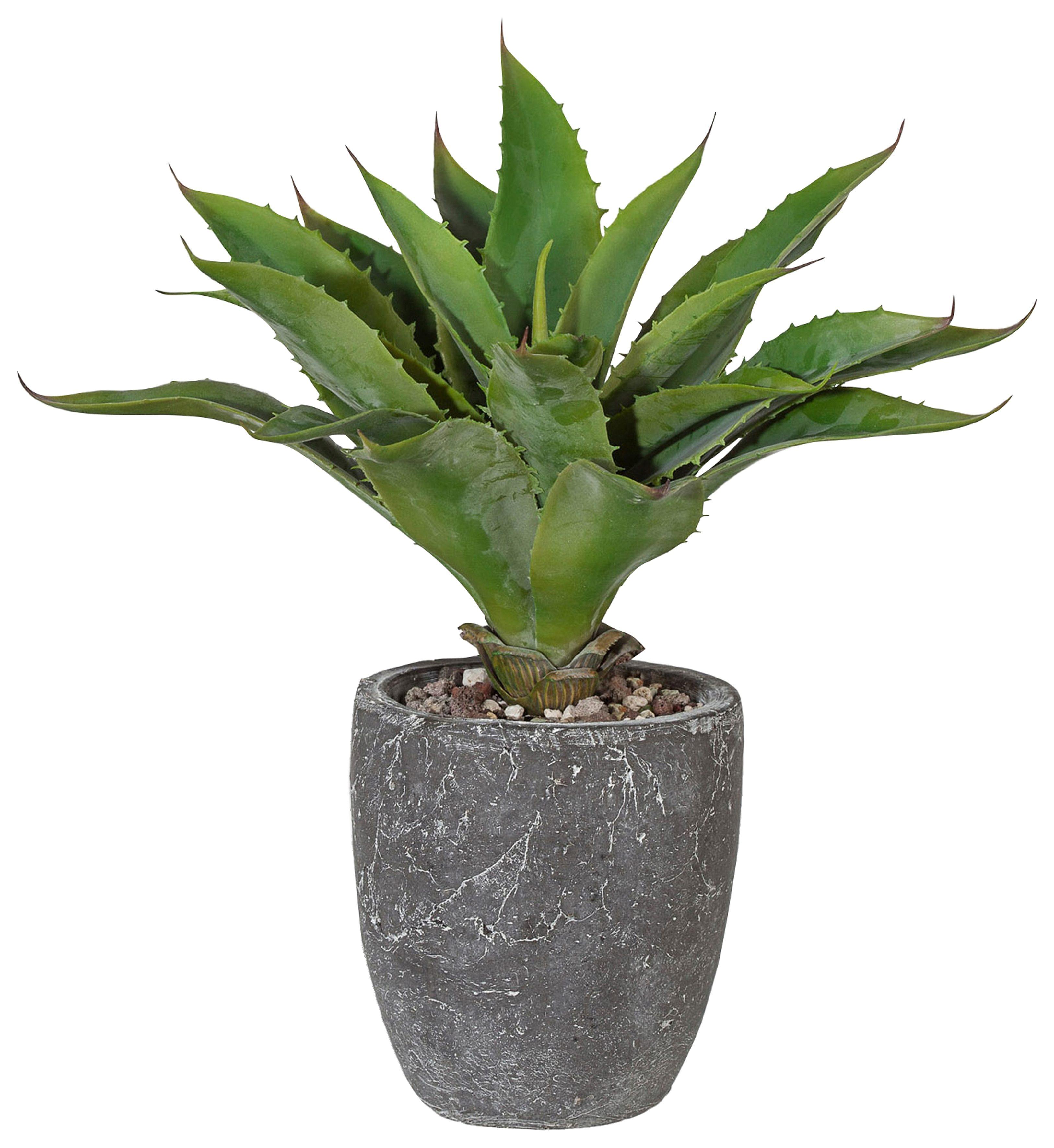 Home affaire Kunstpflanze »Kaktus«
