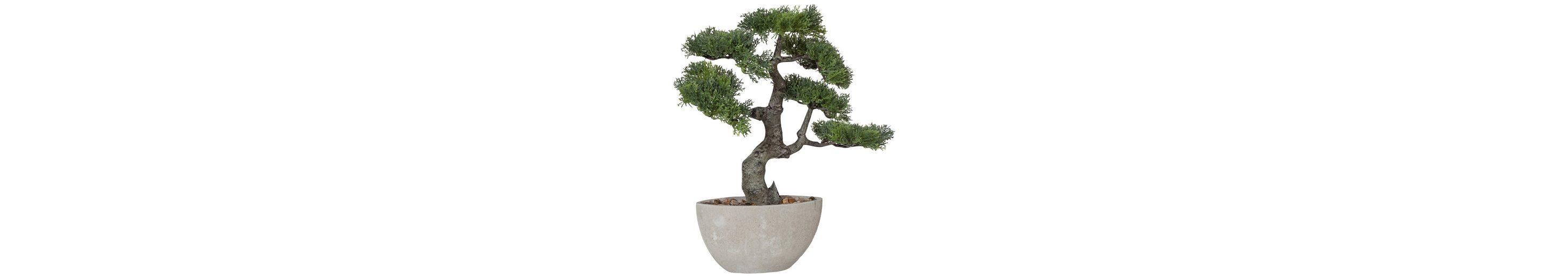 Premium collection by Home affaire Kunstpflanze »Bonsai«