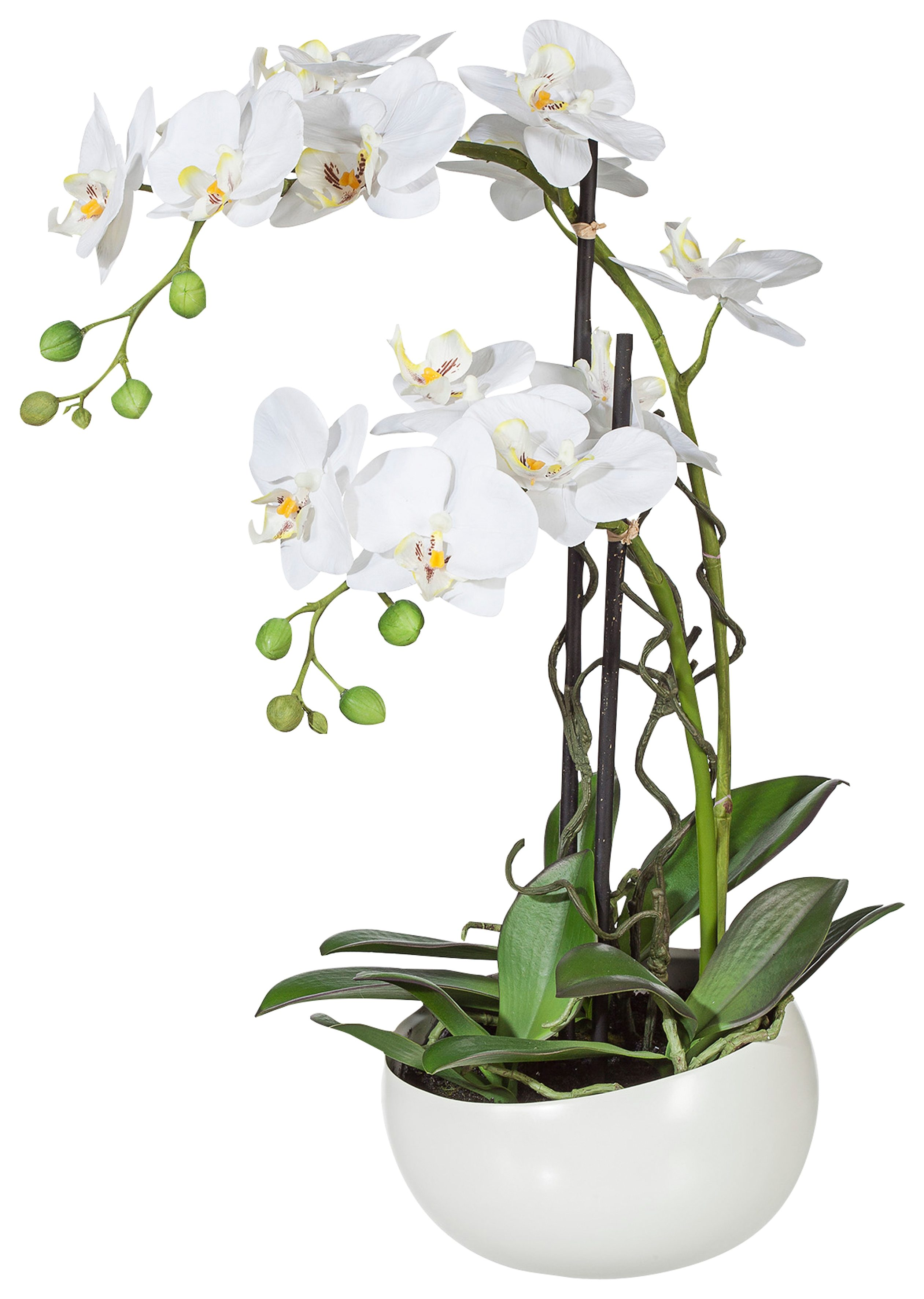 Home affaire Kunstblume »Orchidee« in einer Keramikschale