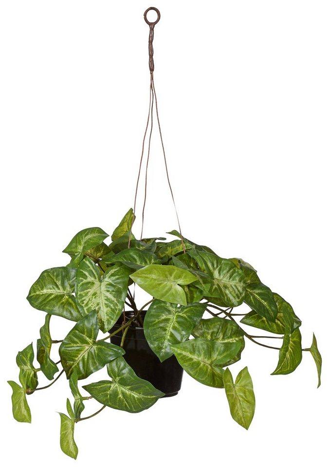 Home affaire Kunstpflanze »Grünpflanzen« in grün