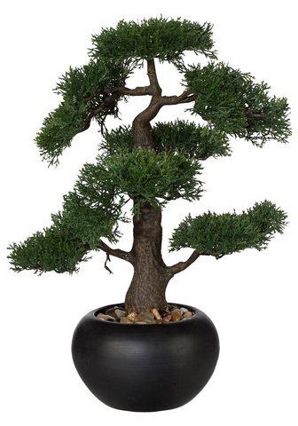 Dirbtinis augalas »Bonsai«