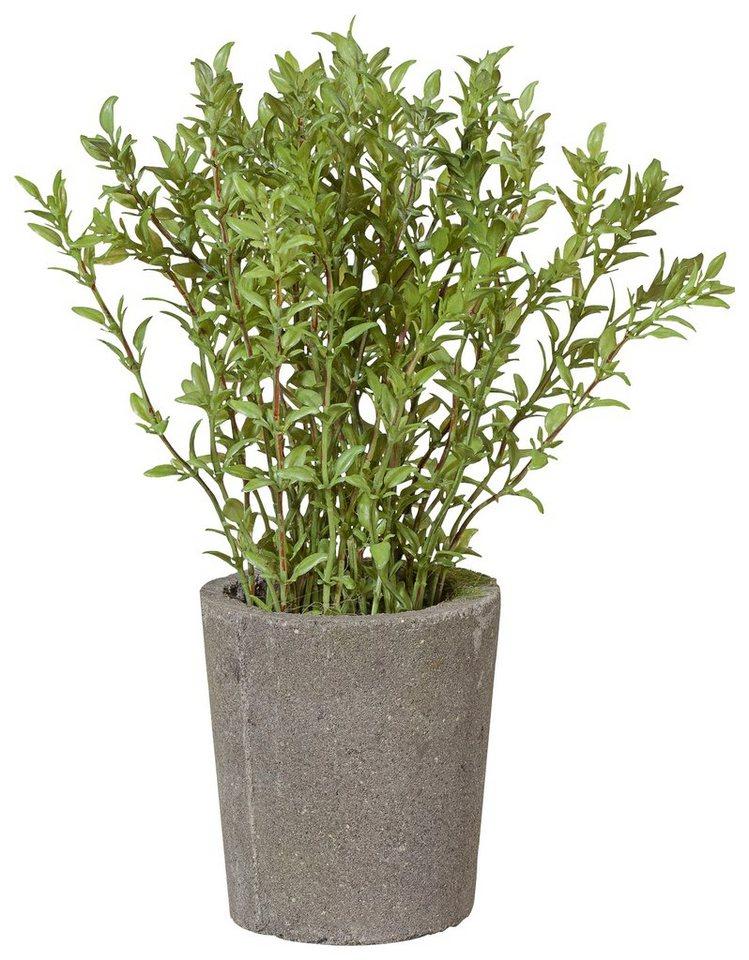 Home affaire Kunstpflanze »Thymianbusch« in grün