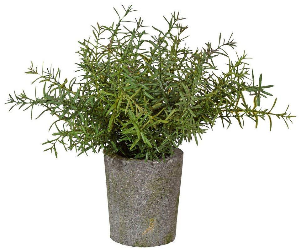 Home affaire Kunstpflanze »Rosmarinbusch« in grün