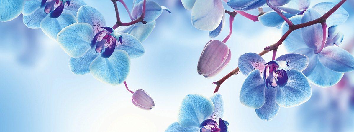 Eurographics, Glasbild, »Blue Orchids«, 80/30 cm