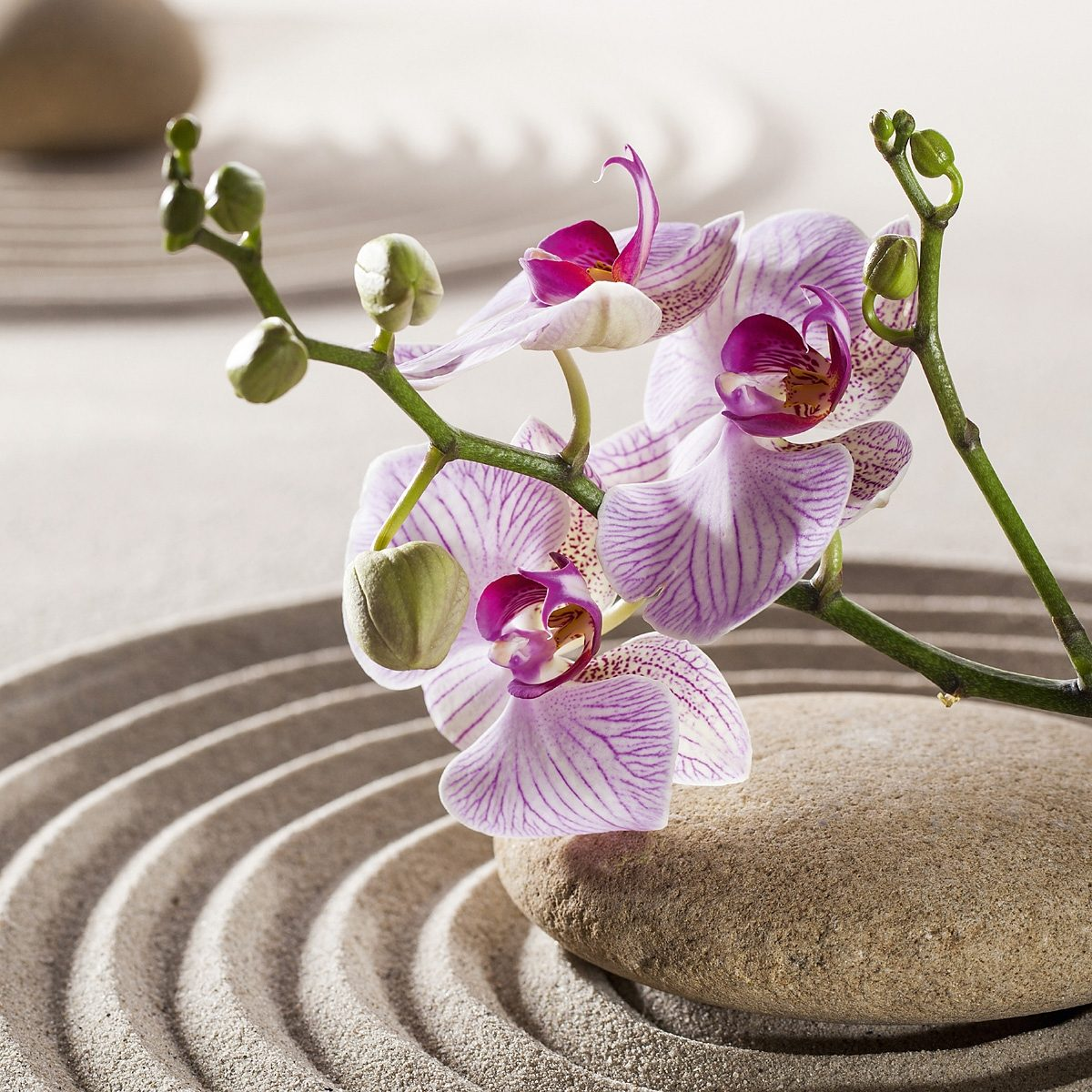 EUROGRAPHICS Glasbild »Orchids In The Sky«, 30/30 cm