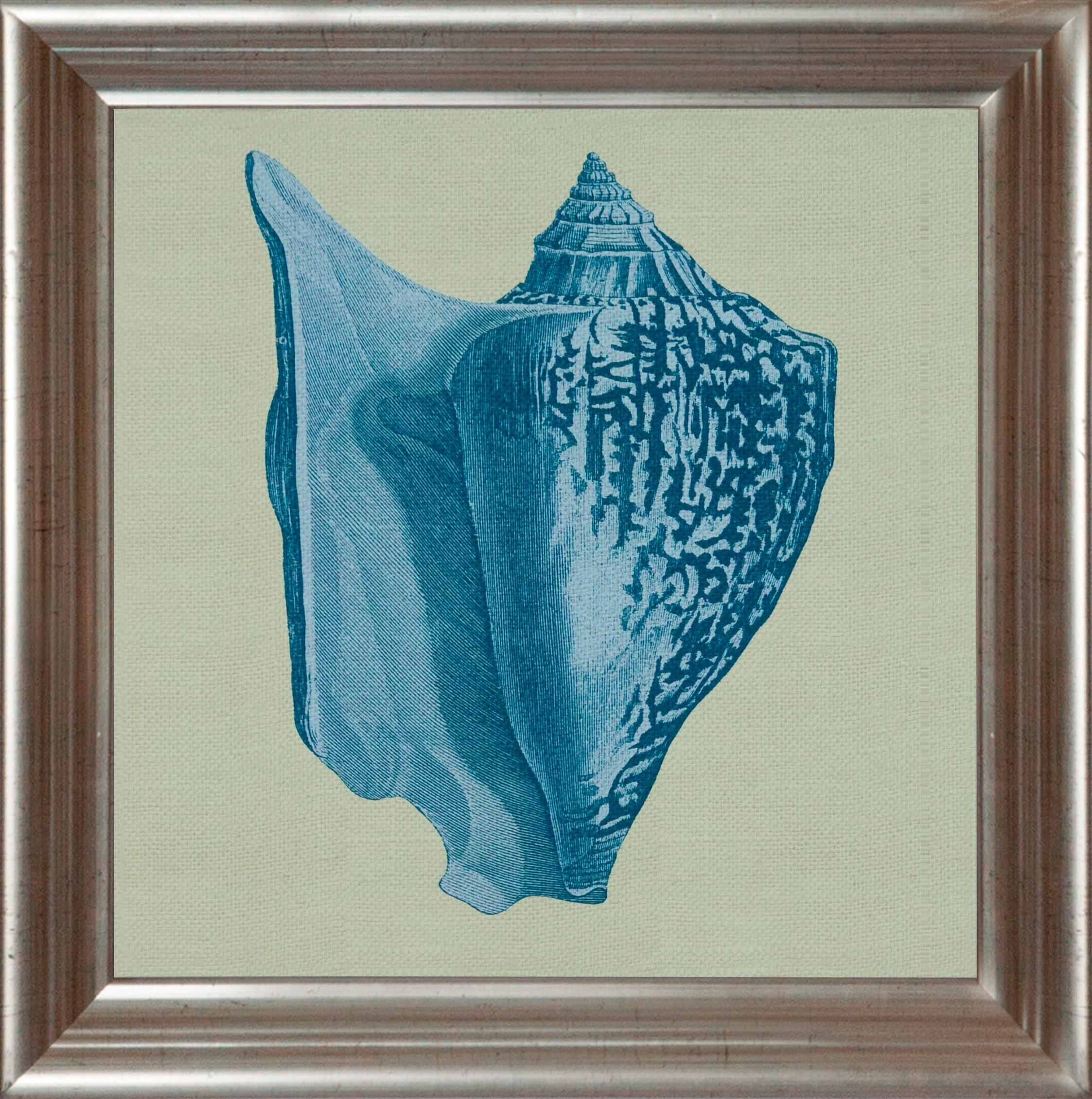 G&C gerahmter Kunstdruck »Chambray Shell Motiv 1«, 40/40 cm