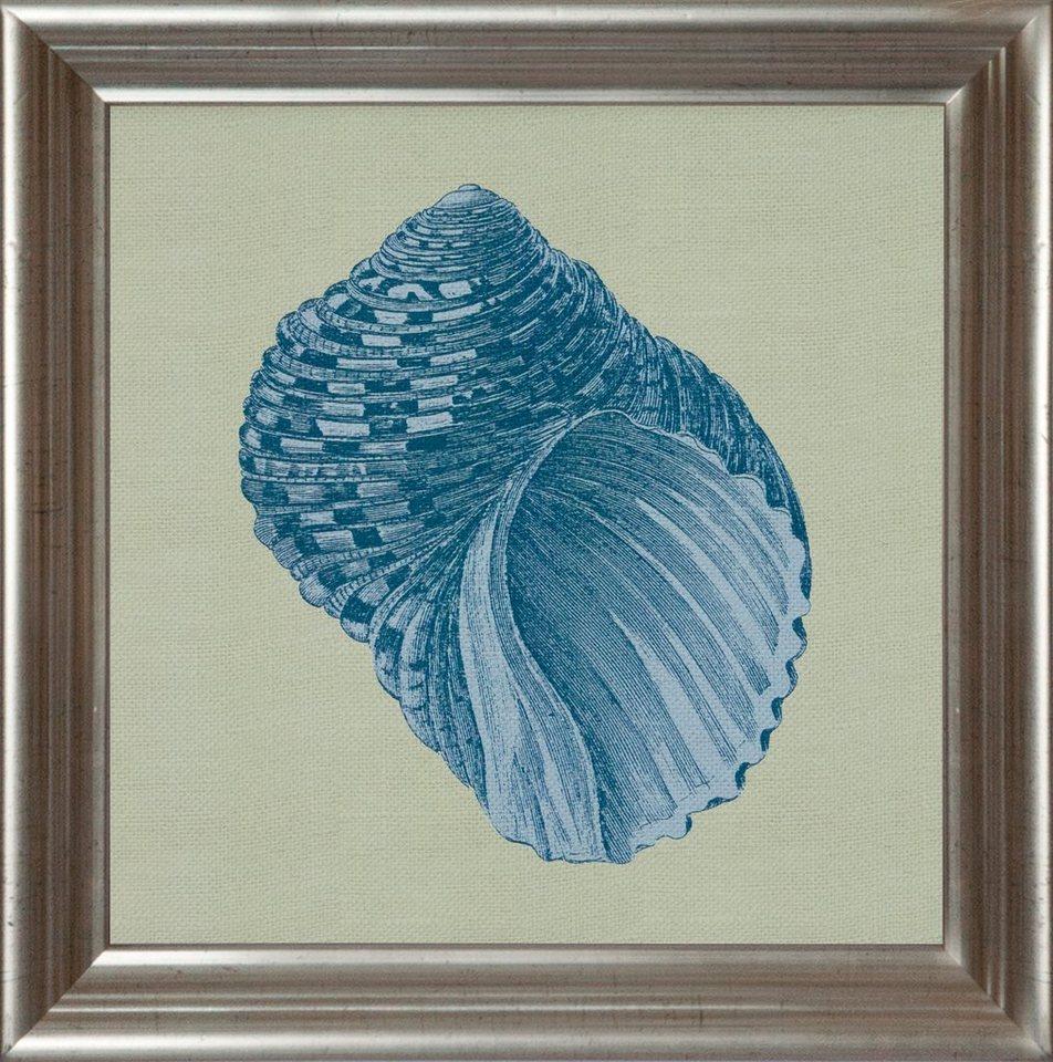 G&C gerahmter Kunstdruck »Chambray Shell Motiv 4« 40/40 cm in Grün/Grau