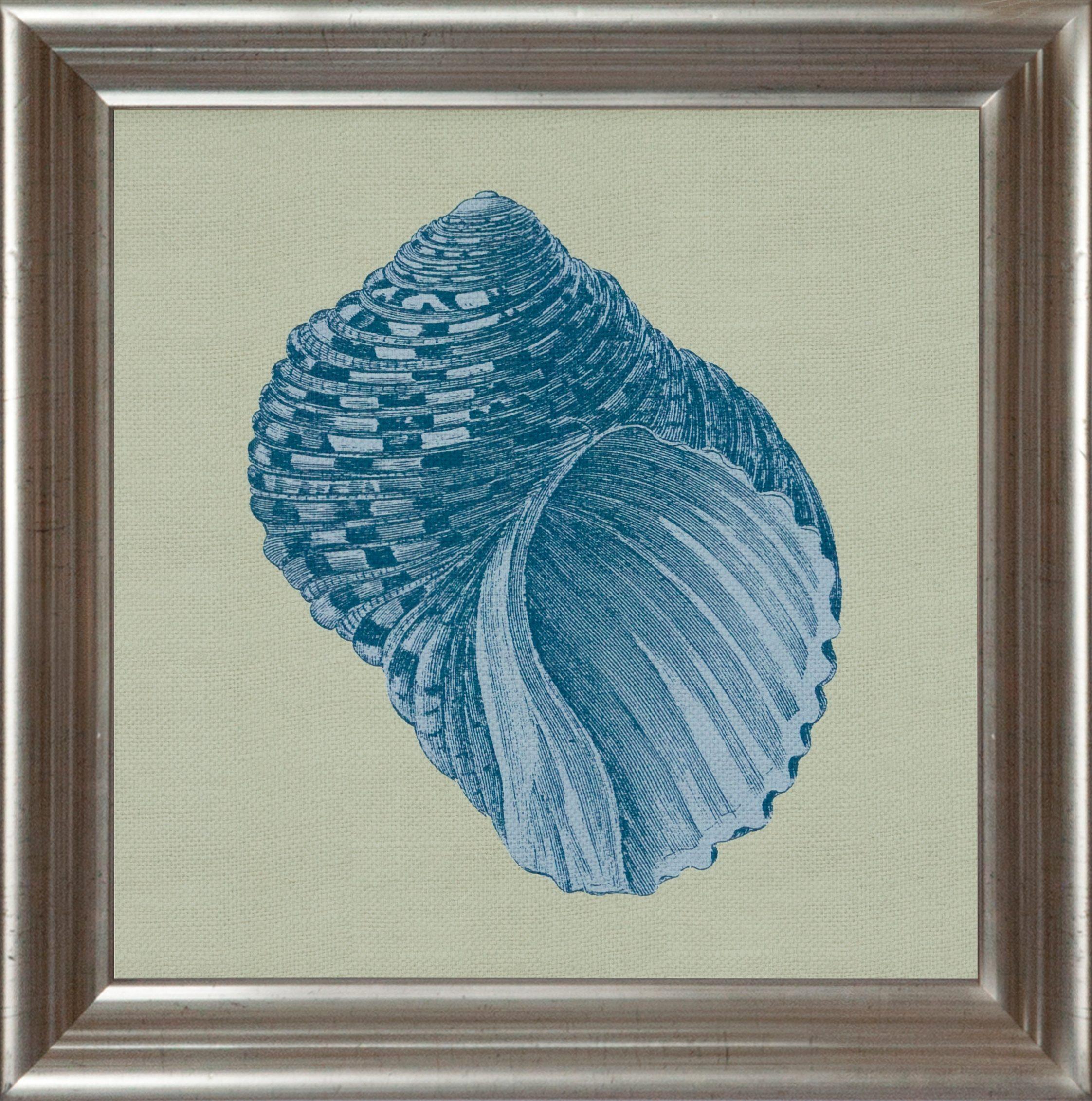 G&C gerahmter Kunstdruck »Chambray Shell Motiv 4« 40/40 cm