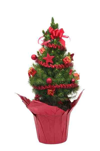 Konifere »Weihnachtsbaum«, rot geschmückt, Höhe ca.: 60 cm