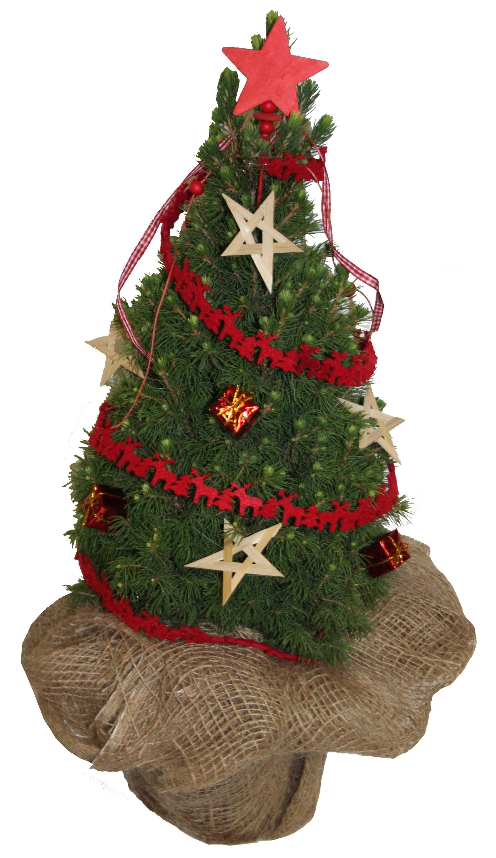 Konifere »Weihnachtsbaum«, rot geschmückt, Höhe ca.: 25 cm