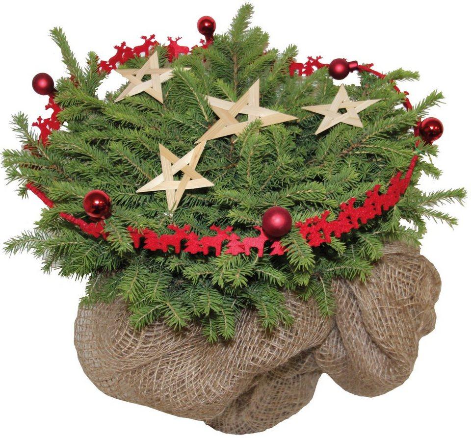 konifere weihnachtsbaum rot geschm ckt h he ca 15 cm online kaufen otto. Black Bedroom Furniture Sets. Home Design Ideas