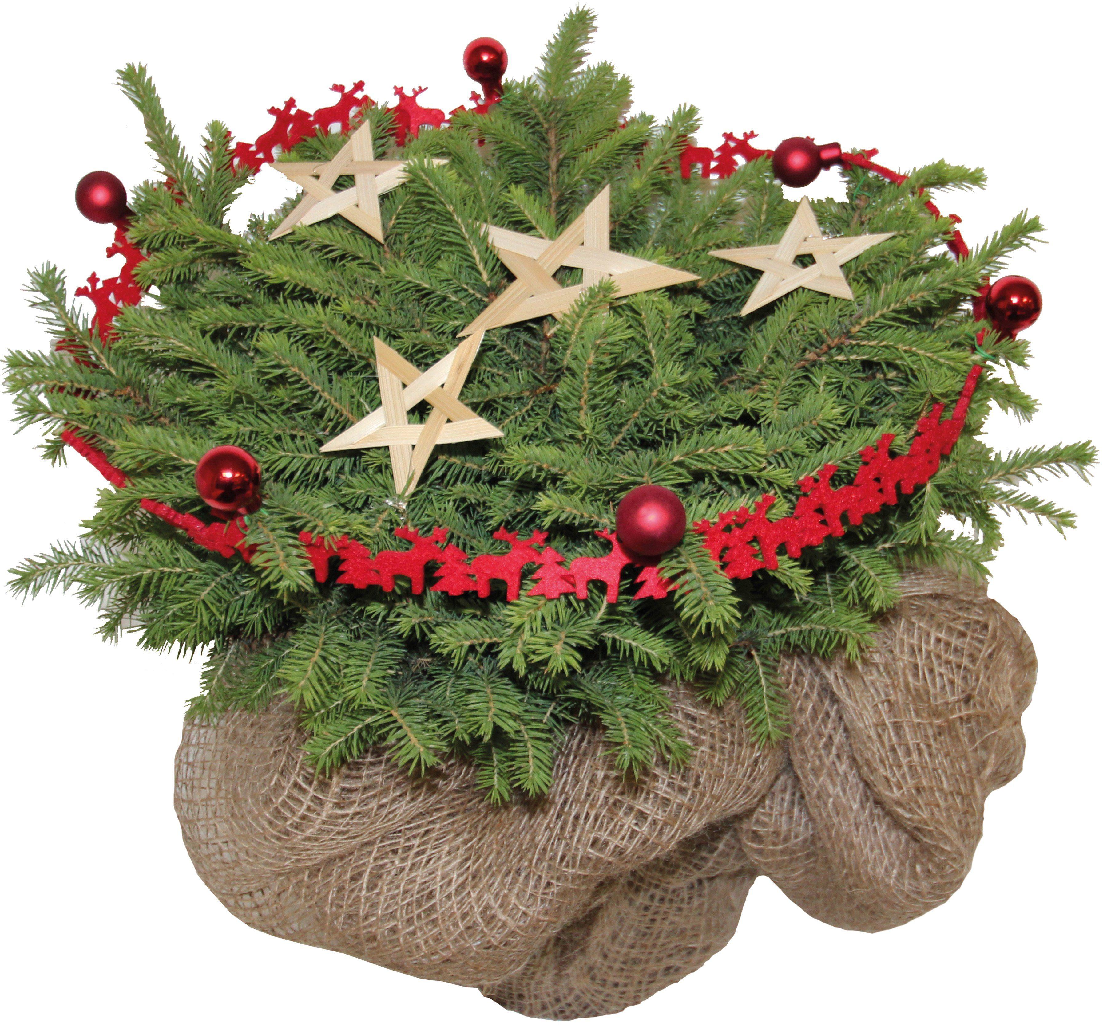Konifere »Weihnachtsbaum«, rot geschmückt, Höhe ca.: 15 cm