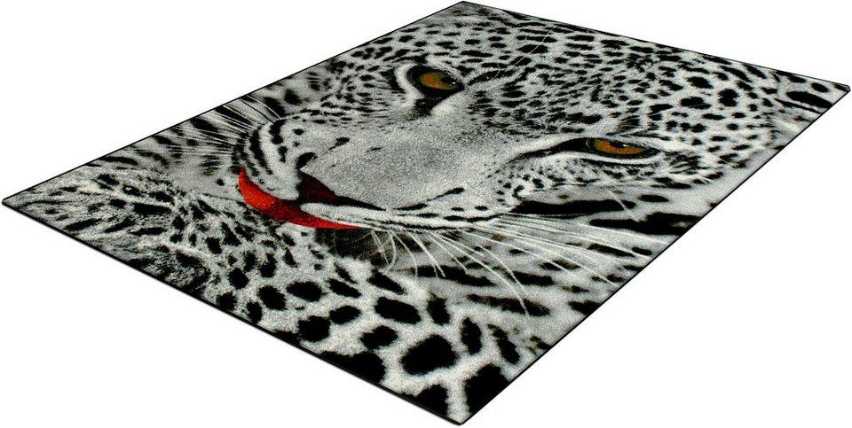 Teppich, Trend-Teppiche, »Kolibri 11122«, Leoparden Motiv in grau